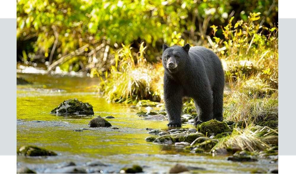 alyeska-mobilehero-wildlife-section2