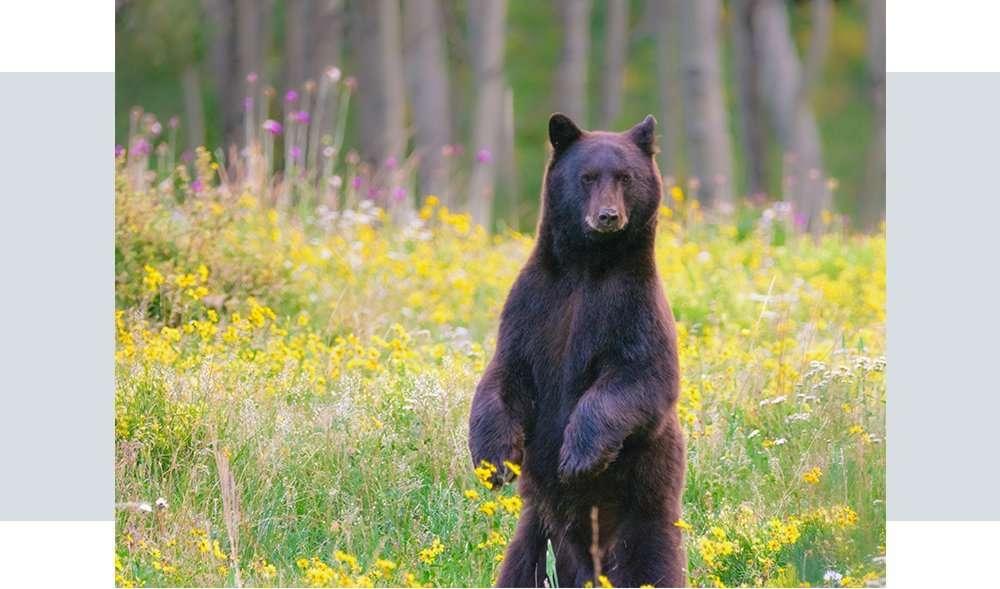 alyeska-mobilehero-wildlife-section4